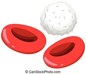 Células sanguíneas rojas y blancas