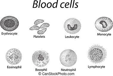 Células sanguíneas. Un conjunto de células monocromáticas. Células rojas, plaquetas, leucocitos, linfocitos, eosinófilos, neutrófilos, basófilos, monocitos. Infográficos. Ilustración de vectores en el fondo aislado