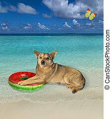 círculo, perro, inflable, descansar