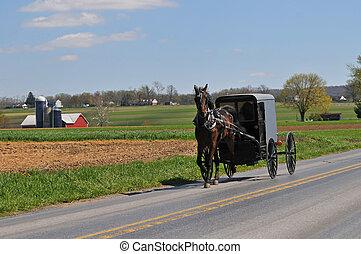 Caballo Amish y calesa