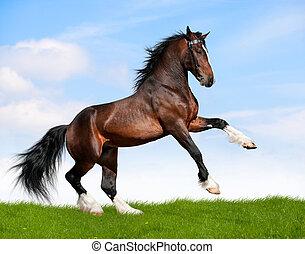 caballo, bahía, field., gallops