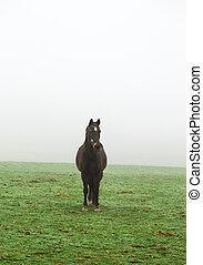 Caballo en la niebla en un prado