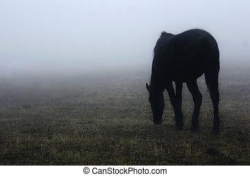 Caballo en la niebla
