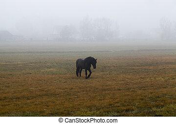 caballo, niebla