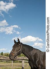 Caballo oscuro en la granja con un gran cielo