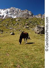 Caballo pastoreando en la montaña