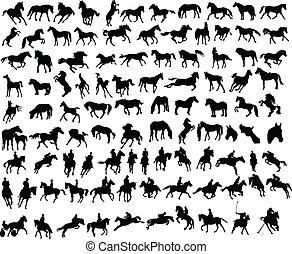 caballos, 100
