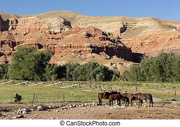 Caballos de Corralled wyoming Badlands rancho animales de ganado