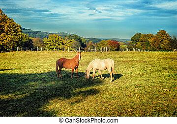 Caballos en el campo de verano
