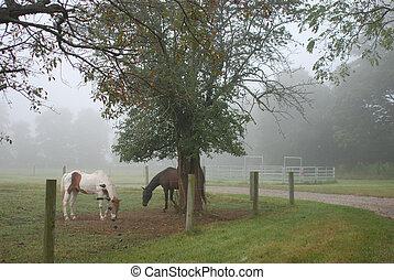 Caballos en la niebla
