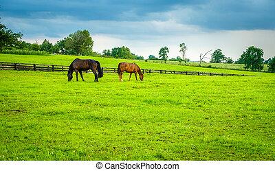 Caballos en un pasto en Kentucky