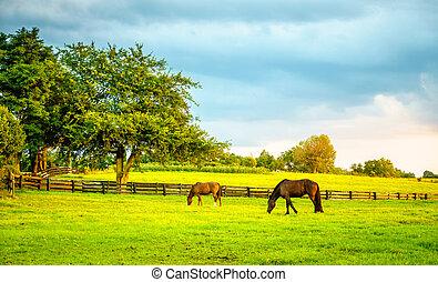 Caballos en una granja en Kentucky