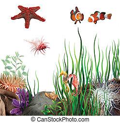 caballos, pez, ocean., fondo, estrella, shells., payaso, mar, seabed.