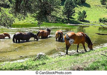 caballos, pirineos, catalán, salvaje, spain., valle, aran