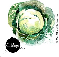 Cabbage. Pintura acuática dibujada a mano sobre fondo blanco. Vec
