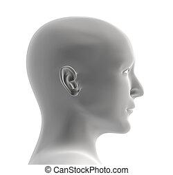 Cabeza de color gris humano