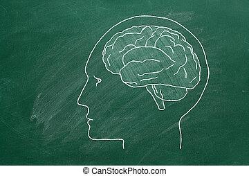 cabeza humana, brain.