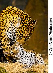Cabrones de Jaguar