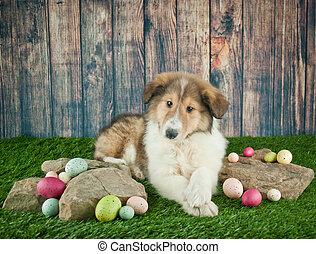 Cachorrito de Pascua