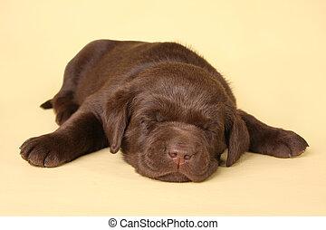 Cachorrito durmiente