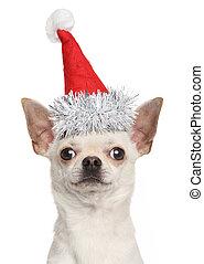 Cachorro chihuahua con sombrero rojo navideño