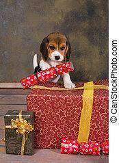 Cachorro de Beagle de Navidad