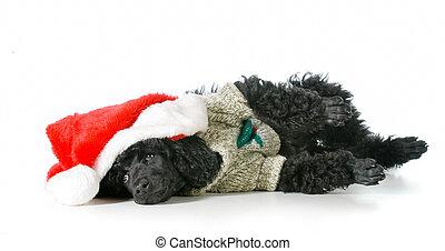Cachorro de Navidad