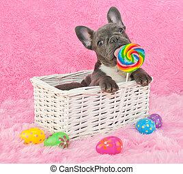 Cachorro de Pascua