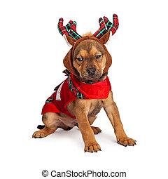 Cachorro de reno de Navidad
