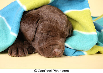 Cachorro durmiente