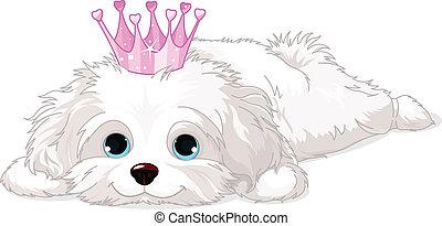 Cachorro havanés con corona