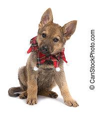 Cachorro pastor de Navidad