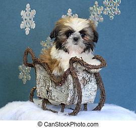 Cachorro Shih tzu en trineo de invierno