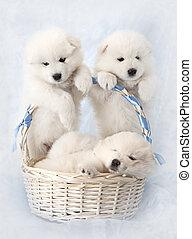 Cachorros con canasto