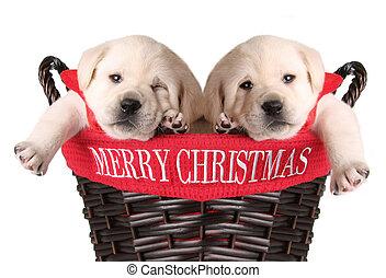 Cachorros de Navidad graciosos