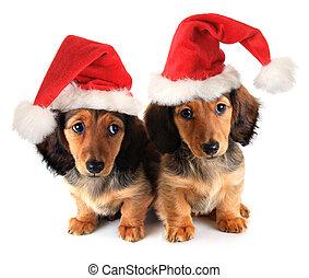 Cachorros de Navidad