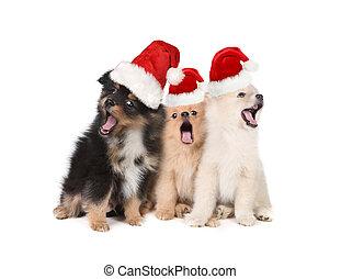 Cachorros de Navidad usando sombreros de Santa y cantando