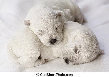 cachorros dormidos