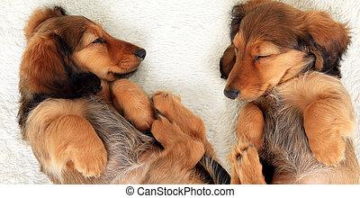 Cachorros durmientes
