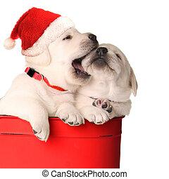 Cachorros llenos