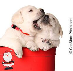 Cachorros navideños juguetones