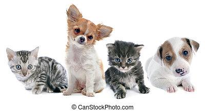 Cachorros y gatitos