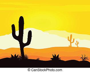 cacto, méxico, desierto, ocaso