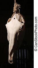 Calavera de un caballo sacrificado colgando en el nudo verdugo