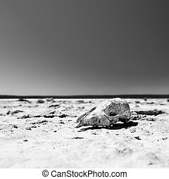 Calavera en el desierto en blanco y negro