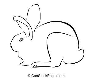 calco, conejo