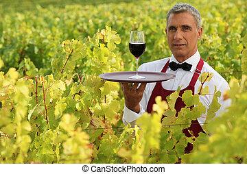 camarero, vino vidrio, campo