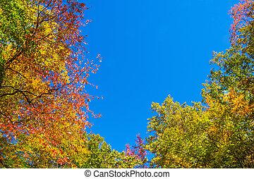 Cambio de otoño