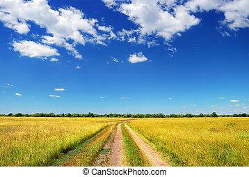 Camino de campo en el campo de verano