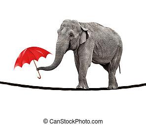 camino de cuerda floja, elefante